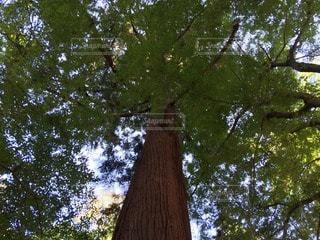 自然の写真・画像素材[114430]