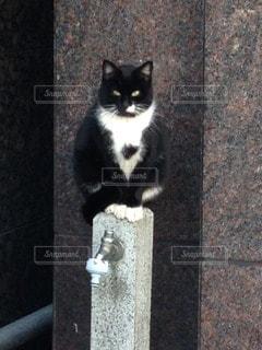 No.113956 猫