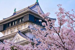 城と桜の写真・画像素材[3003101]