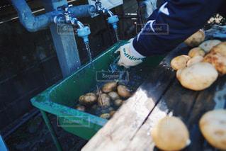 農業・収穫物・じゃがいもの写真・画像素材[2971799]