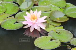 池のクローズアップの写真・画像素材[3678565]