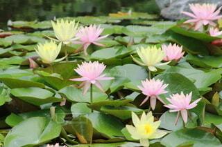 緑の葉のピンクの花のグループの写真・画像素材[3678566]
