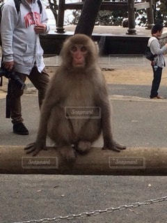 猿 - No.118281