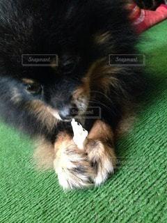 犬の写真・画像素材[118285]