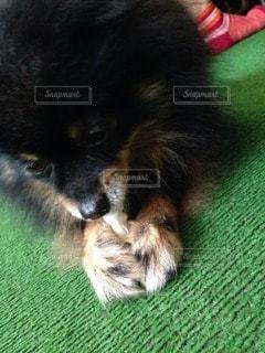 犬の写真・画像素材[118286]