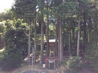 木の写真・画像素材[114059]