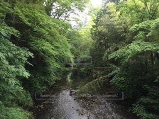 自然の写真・画像素材[120281]