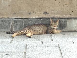 猫 - No.120965