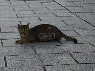 猫の写真・画像素材[120966]