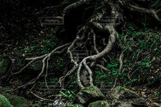 樹木の写真・画像素材[3191970]
