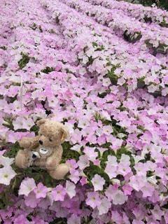 No.118630 お花畑