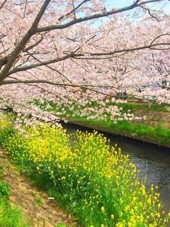 No.118640 お花畑