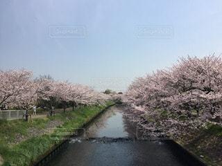 No.118641 お花畑