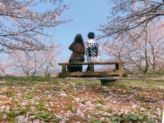 桜の木の下の写真・画像素材[3112800]