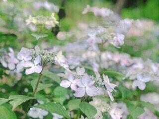 花園のクローズアップの写真・画像素材[4332431]