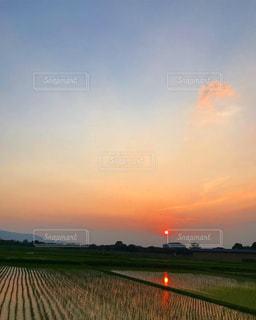 田んぼに映る夕日の写真・画像素材[2980474]