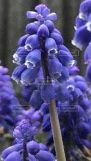 花のアップの写真・画像素材[3059085]
