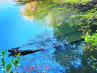 池と船の写真・画像素材[3280360]