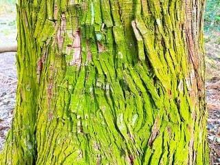 木のクローズアップ 苔の写真・画像素材[3369684]
