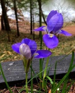 綺麗な紫の花の写真・画像素材[3540495]