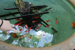 金魚鉢の写真・画像素材[2980385]