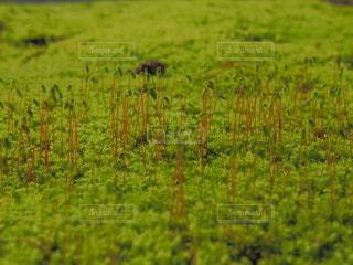 苔の写真・画像素材[2983052]