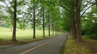 道路の脇に木がある道の写真・画像素材[2996647]