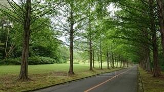 フェアウェイを背景に道路の脇に木がある道の写真・画像素材[2996650]