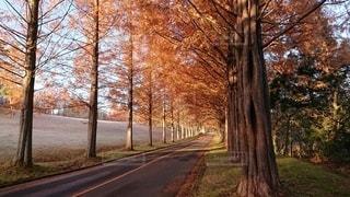 秋の泉国際カントリークラブの写真・画像素材[3101856]