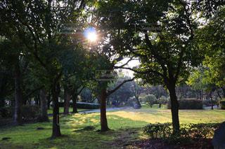 公園の木の写真・画像素材[2991438]