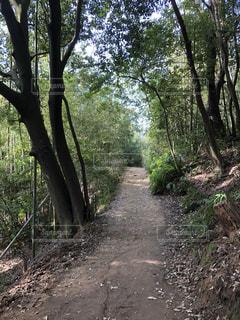 森林 一本道の写真・画像素材[2991751]