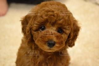 犬の写真・画像素材[114420]