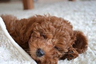 犬の写真・画像素材[114446]