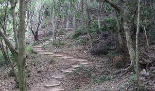 森の中の木の写真・画像素材[3967831]