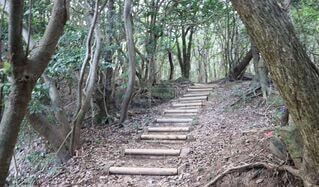 森の中の木の写真・画像素材[3967826]