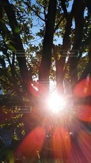 枝の隙間からの朝日の写真・画像素材[2979926]