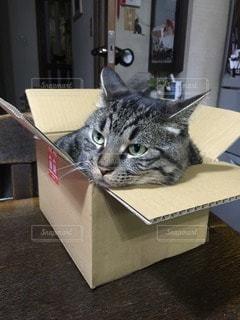 猫 - No.114554