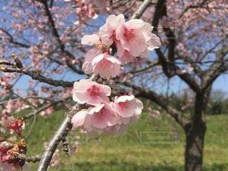 自然の写真・画像素材[114543]