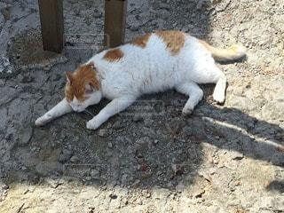 猫 - No.114596