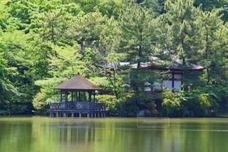 三宝寺池と厳島神社の写真・画像素材[4056266]