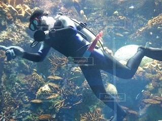 水中の写真・画像素材[2982749]