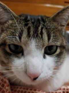 猫のクローズアップの写真・画像素材[2985501]