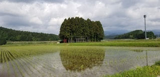 田園風景の写真・画像素材[2986396]