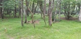 明るい森の写真・画像素材[2986643]