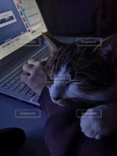 腕の中のネコの写真・画像素材[2987131]