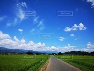 田舎道の写真・画像素材[2988015]