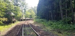 森の中の線路の写真・画像素材[2998291]
