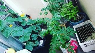 家庭菜園の写真・画像素材[2985557]
