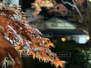 紅葉と建物の写真・画像素材[2986629]