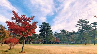 軽井沢 紅葉の写真・画像素材[2991609]